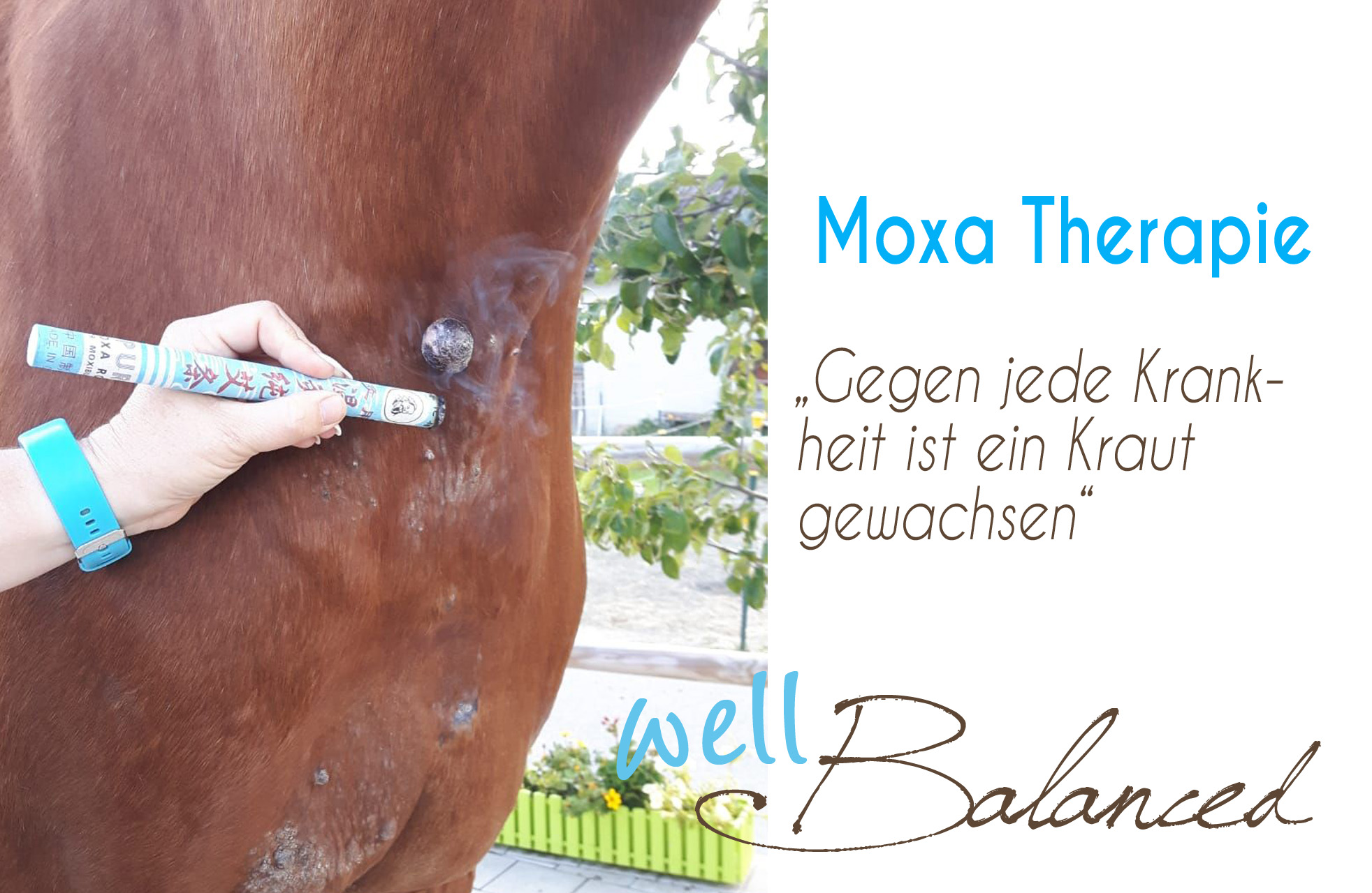 You are currently viewing Die Moxatherapie in der TCM