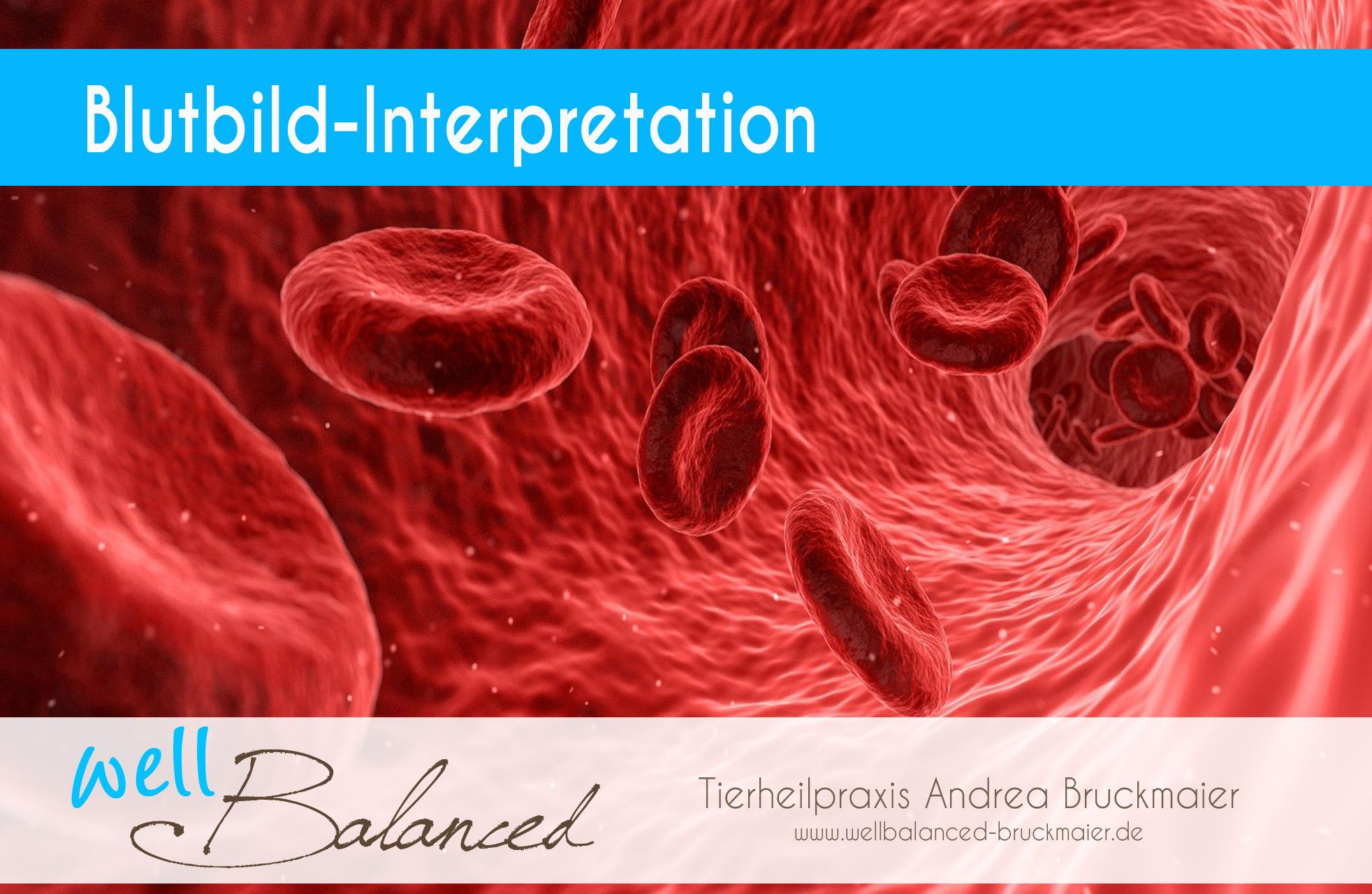 You are currently viewing Blutbild-Interpretation beim Pferd