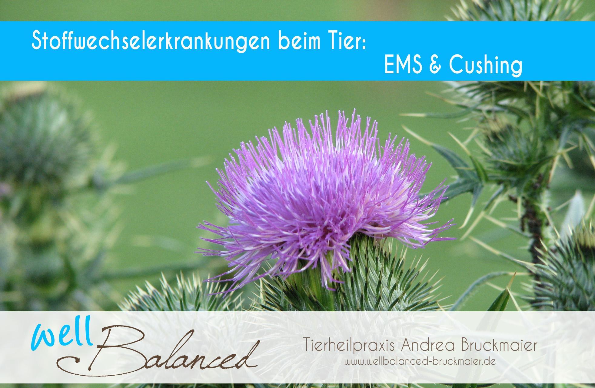 You are currently viewing Stoffwechselerkrankungen beim Tier: EMS & Cushing